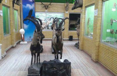 بازدید از موزه تاریخ طبیعی آذربایجان شرقی ۱۱ الی ۱۳ فروردین رایگان است